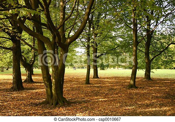 Autumn Day II - csp0010667