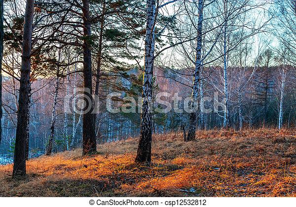 Autumn evening in the Siberian taiga - csp12532812