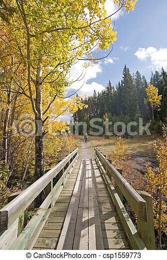 Autumn Fall Colors - csp1559773