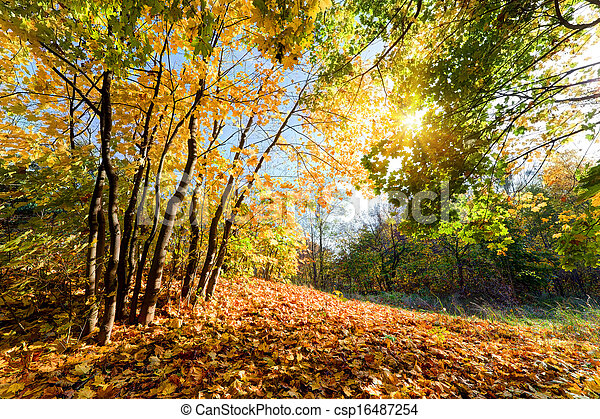Autumn, fall landscape in forest - csp16487254