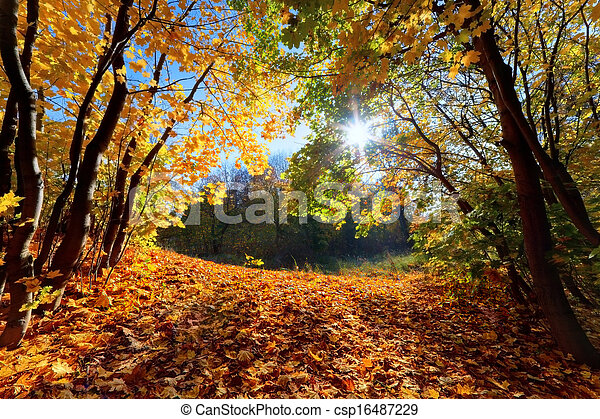 Autumn, fall landscape in forest - csp16487229