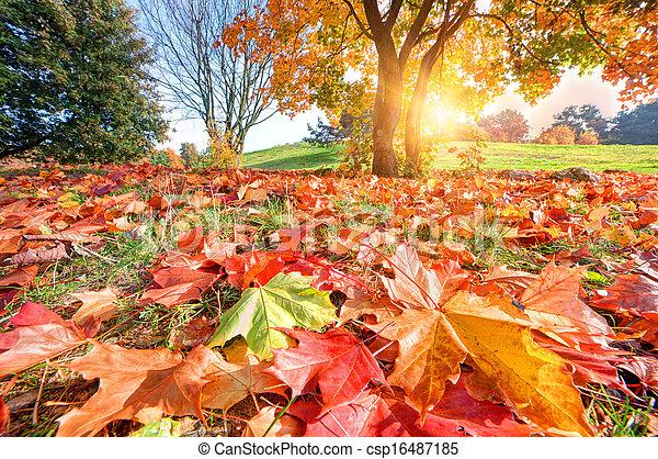 Autumn, fall landscape in park - csp16487185