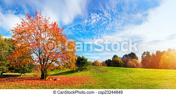 Autumn, fall landscape. Tree with colorful leaves. Panorama - csp23244849