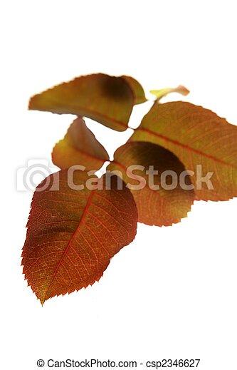 Autumn, fall leaves decorative still at studio white background - csp2346627