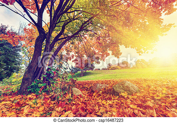 Autumn, fall park, colorful leaves - csp16487223