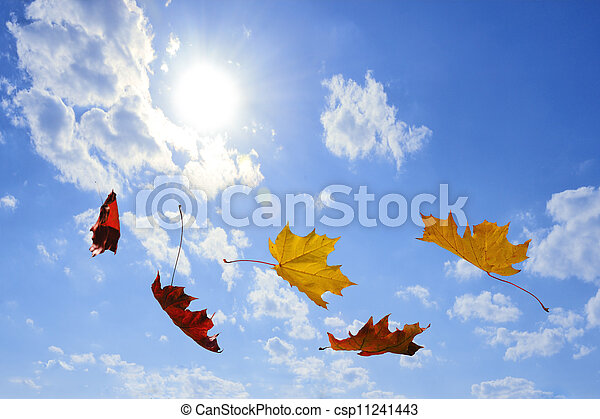 autumn falling leaves - csp11241443