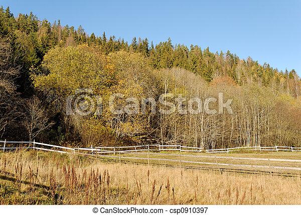 Autumn Field - csp0910397