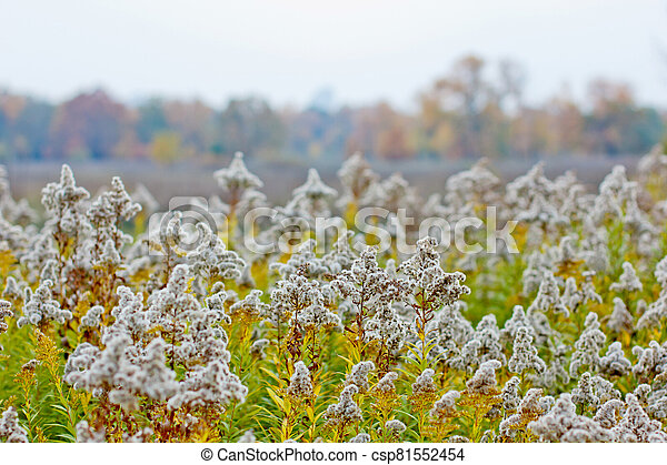 autumn field with prickly plants - csp81552454