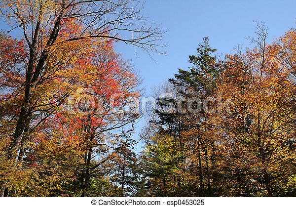 Autumn Foliage in the Forest - csp0453025