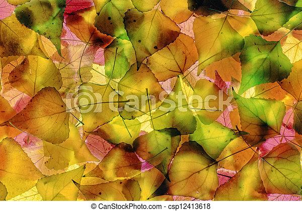 Autumn foliage - csp12413618