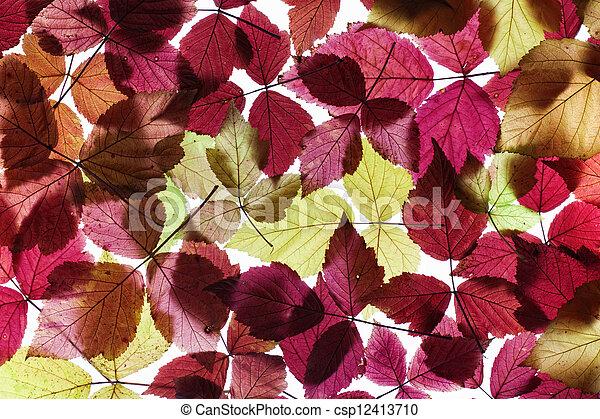 Autumn foliage - csp12413710