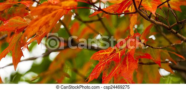 Autumn Foliage - csp24469275