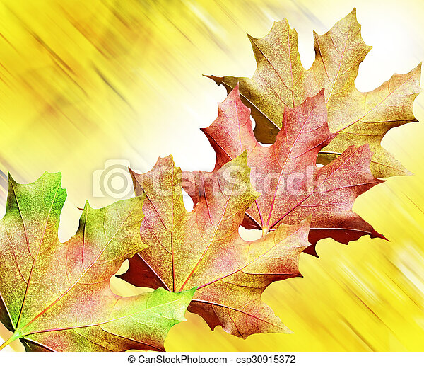 autumn foliage - csp30915372