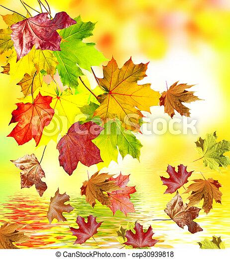 autumn foliage - csp30939818
