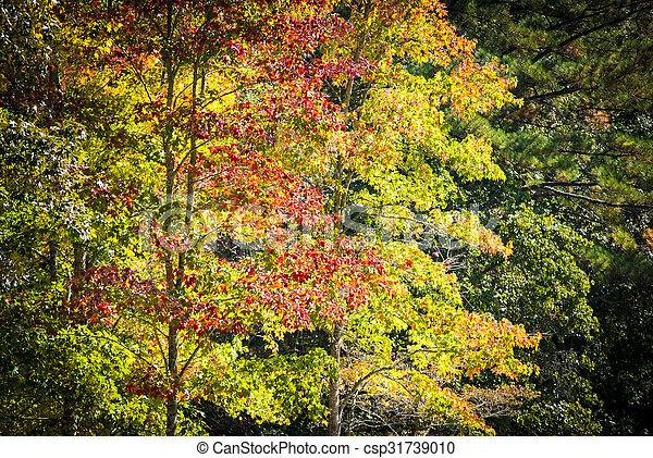 Autumn foliage - csp31739010