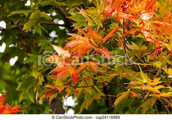 Autumn Foliage - csp24116989