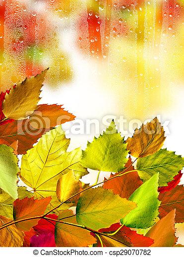 autumn foliage - csp29070782