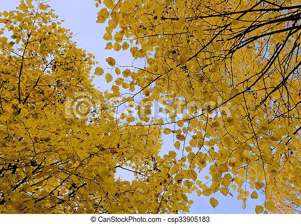 autumn foliage - csp33905183