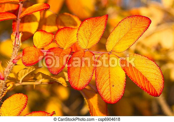 autumn foliage - csp6904618