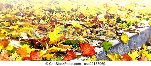 autumn foliage - csp22167969