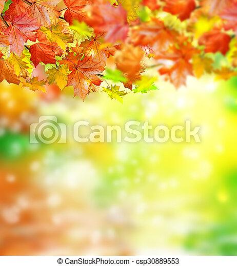 autumn foliage - csp30889553