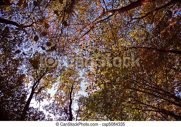 Autumn foliage - csp5084335