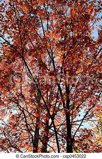 Autumn Foliage - csp0453022