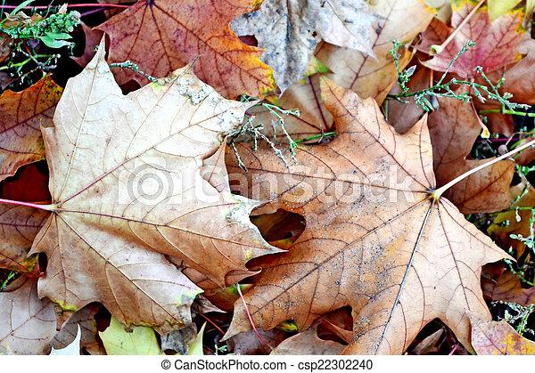 autumn foliage - csp22302240
