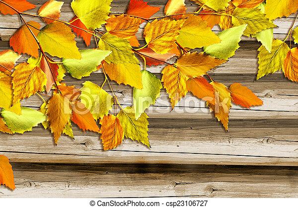 autumn foliage - csp23106727