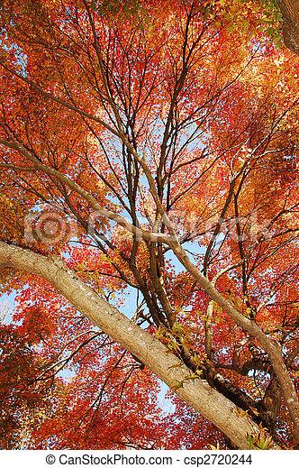 Autumn foliage - csp2720244