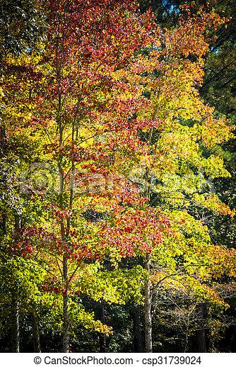 Autumn foliage - csp31739024