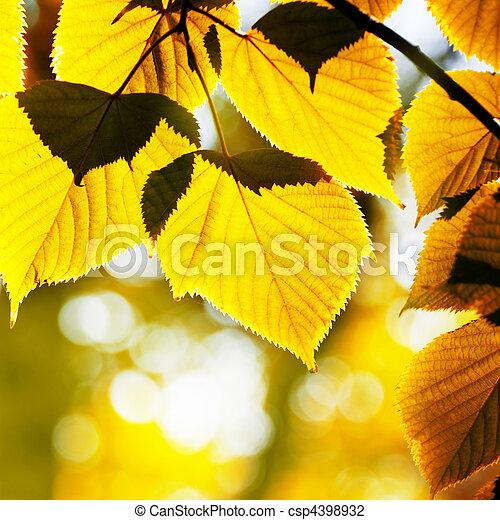autumn foliage - csp4398932