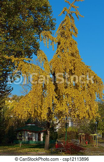 Autumn foliage - csp12113896
