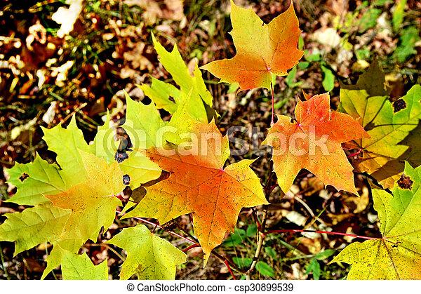 autumn foliage - csp30899539