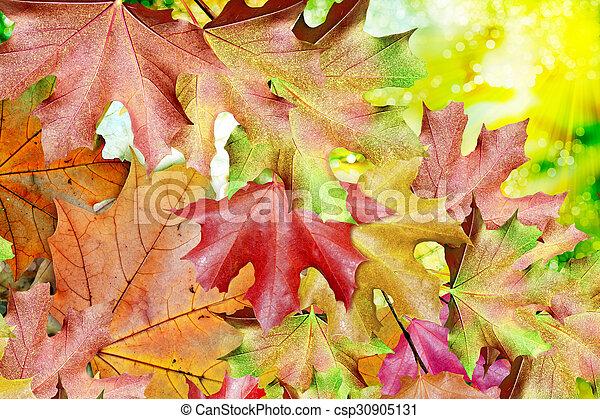 autumn foliage - csp30905131