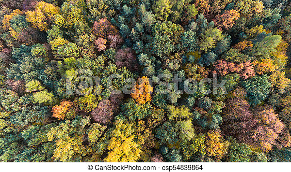 Autumn forest aerial drone view - csp54839864