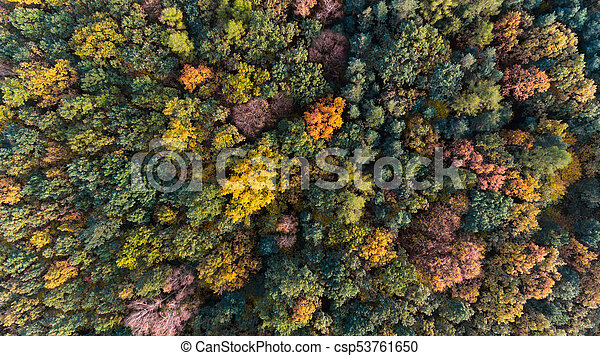 Autumn forest aerial drone view - csp53761650