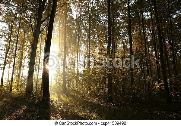 Autumn forest at sunrise - csp41509492