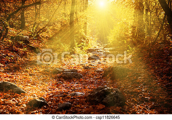 Autumn forest filled rays of the sun - csp11826645