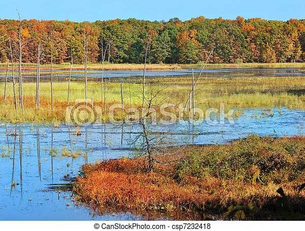 Autumn forest on the lake. - csp7232418