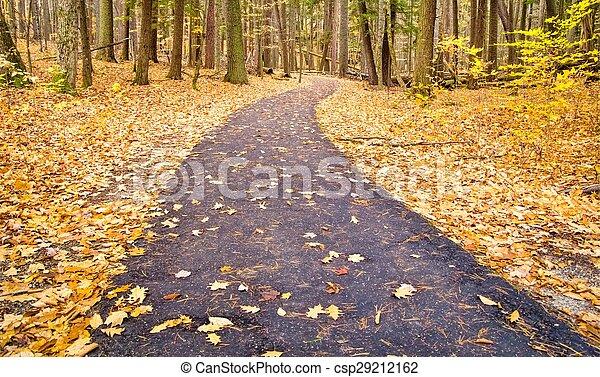Autumn Forest Path - csp29212162