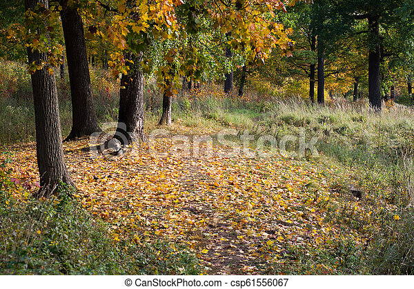 autumn forest. path with yellow fallen leaves - csp61556067