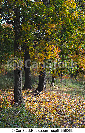 autumn forest. path with yellow fallen leaves - csp61556068