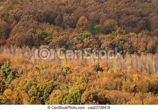 autumn forest - csp23738419