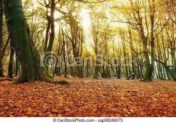 Autumn forest - csp58246075