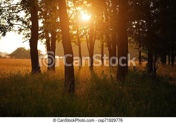 Autumn forest - csp71929776
