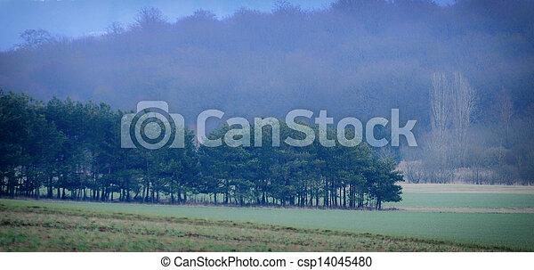 autumn forest - csp14045480