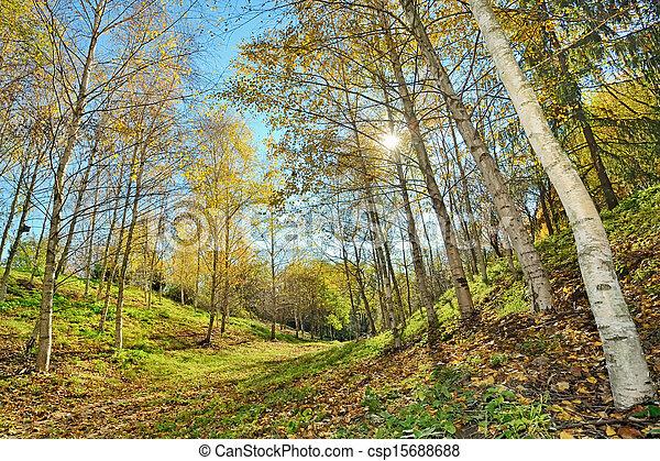 autumn forest - csp15688688