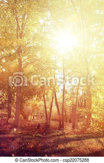 Autumn forest - csp22075288