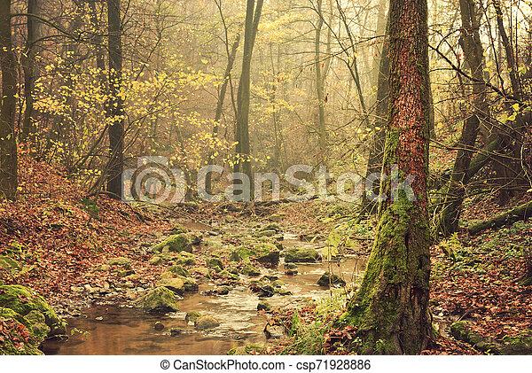 Autumn forest - csp71928886
